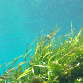 Algues : Lithothamne – Chorella –  Klamath